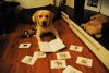 Meine erste Buchrezension - Die Schlucht der freien Hunde - von Konstantin Sergienko