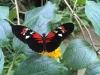 Schmetterlingen jetzt Winterquartiere anbieten